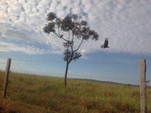 Inhaúma (março/2015)